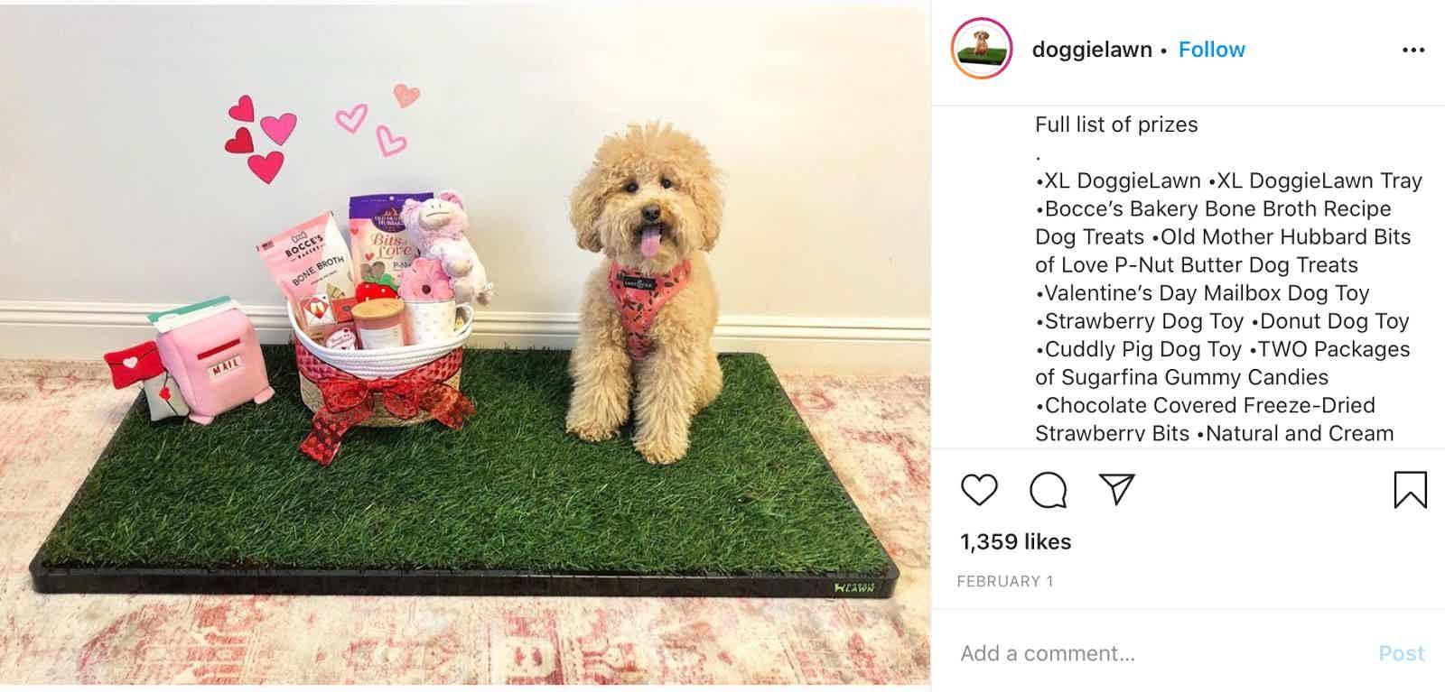 doggielawn contest