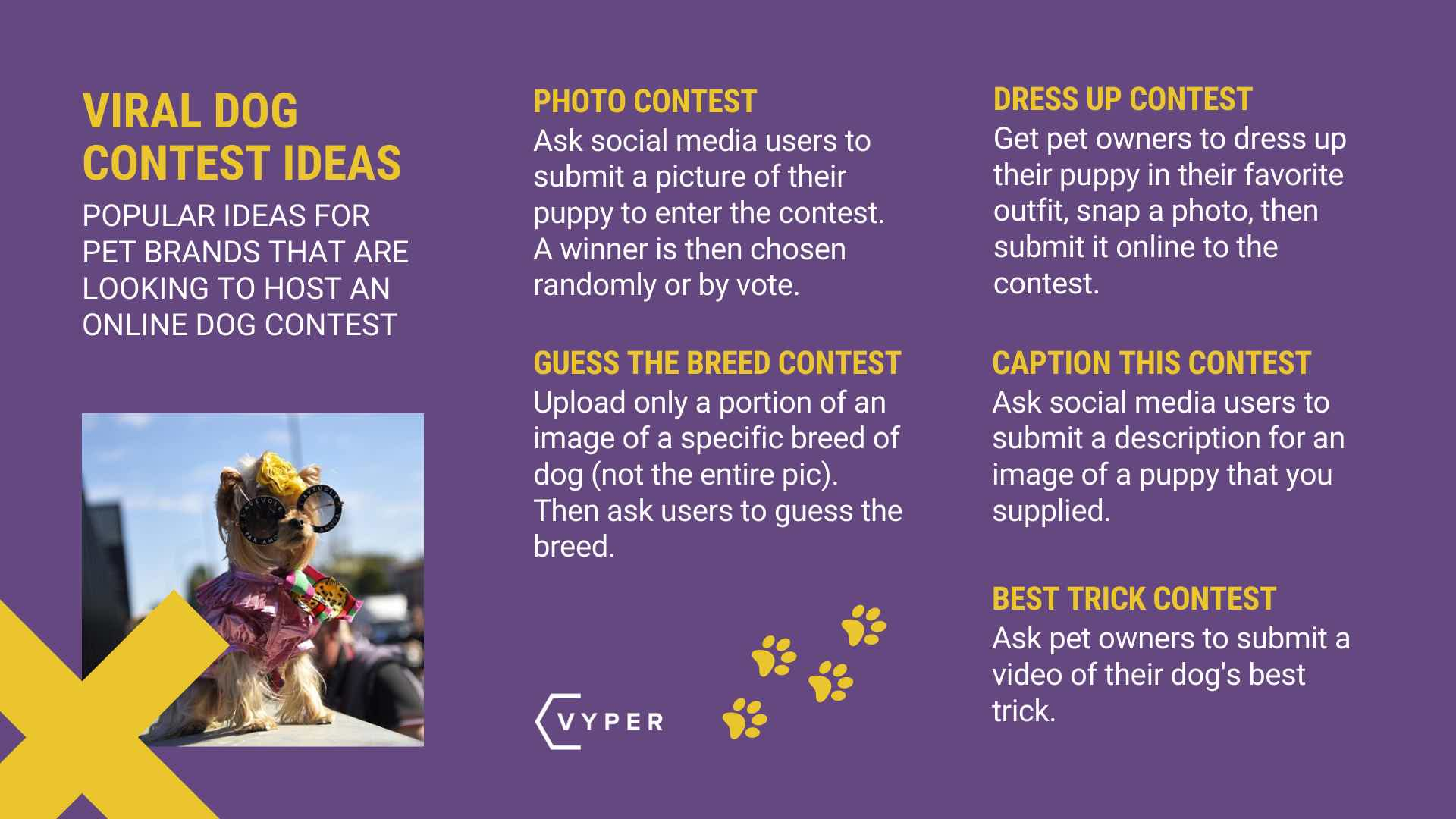 Dog Contest Ideas