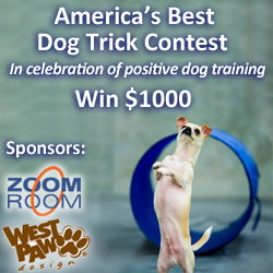 zoom room best dog trick contest