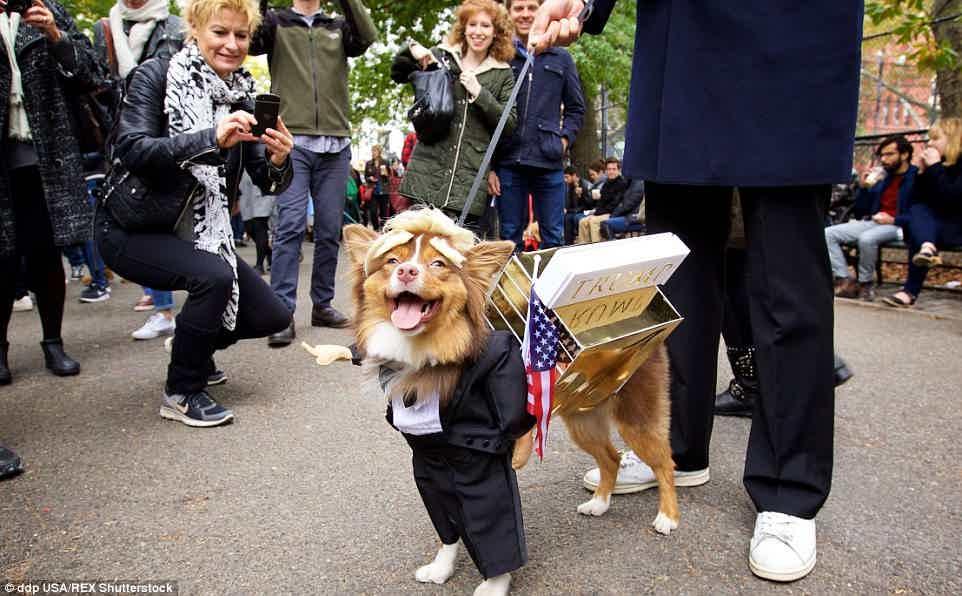 donald trump puppy